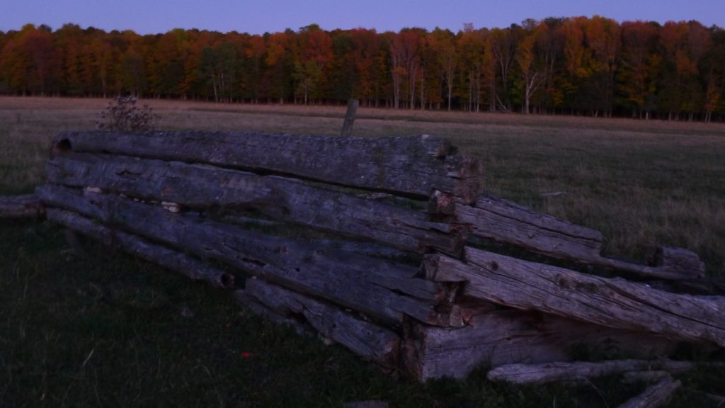 an unexpected purple-blue dusk sets on a copse of red maple trees; in the foreground a rotting and greying wooden fence line an abandoned farm road